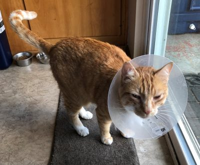 """How a """"cone of shame"""" story could help you through hard times"""